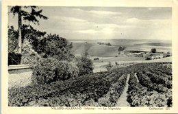 51 - VILLERS - ALLERAND -- Le Vignoble - France