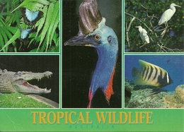 """Australia, Tropical Wildlife, Butterflies, Cassowary, Crocodile And Angel Fish, Thematic Stamp """"Footrace"""" - Australia"""