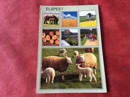 Nederland  Elspeet ( Paard Schaap Lam ) - Andere