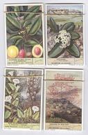 Lot De 48 Chromos Liebig Flore En Néerlandais - Flora - Etat Neuf - Liebig