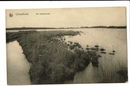CPA - Carte Postale -Belgique-  Kalmthout - Het Stappersven VM46 - Kalmthout
