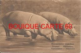 HIPPOPOTAME* HIPPOPOTAMUS - LES HIPPOPOTAMES - Hippopotames
