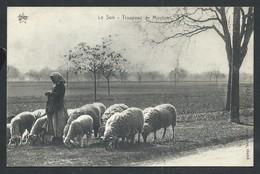 +++ CPA - Ferme - Elevage - Troupeau De Moutons - Métier    // - Elevage