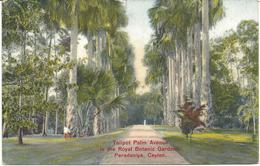TALIPOT PALM AVENUE - ROYAL BOTANIC GARDENS, PERADENIYA - CEYLON WITH POSTAGE DUE STAMP AND CHARGE MARKS - Sri Lanka (Ceylon)