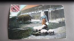 Vie Rustique Dorfleben Ferme Cochon - Agriculture