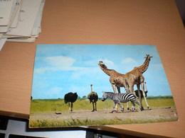Giraffe  Kenya Air Mail - Girafes