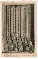 Halle, Kogels Op De Stad Geworpen Gedurende De Bezetting Van Philippe De Clèves In 1489 (pk55150) - Halle