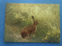 Lapin , écrite Au Verso - Tierwelt & Fauna