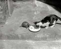 Photo Inattendue Chat Mangeant Avec Tortue Cat - Reproductions
