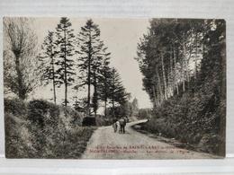 Saint-Vaast La Hougue. Morsalines. Chemin De L'Eglise - Saint Vaast La Hougue