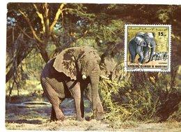 CARTE MAXIMUM  ELEPHANT  (RARE) - Eléphants