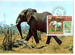 CARTE MAXIMUM  ELEPHANT  (RARE) - Elephants