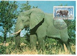 CARTE MAXIMUM  ELEPHANT - Elephants