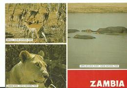 Afrique  Zambia Lioness Head    Impala  Hippo On Kafu  River - Zambie