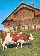Franc Comtoise Du Chauffaud - Vache    Y 181 - Vaches