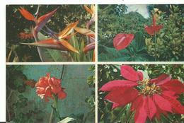 Espagne   Islas Canarias Fleurs - Espagne