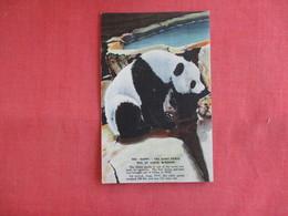 Happy The Giant Panda      Sy Louis Zoo  Ref 3142 - Bears