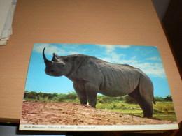 Black Rhinoceros Kenya  By Air Mail - Rhinocéros