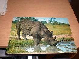 Rhinoceros Kenya  By Air Mail - Rhinocéros