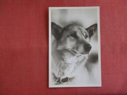 RPPC Yutu Chugisk Alaska   Ref 3142 - Dogs