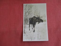 RPPC  Moose  Canada    Ref 3142 - Animals