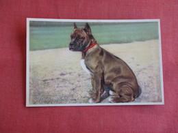 Boxer     Ref 3142 - Animals