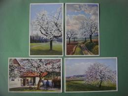 Lot De 6 Jolies Cartes Dessin PAYSAGE - Landschap - Landscape Scenery --- Arbres - Trees - Fleurs - Bloemen - Flowers - - Arbres