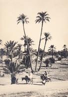MAROC---RARE---TAFILALET--la Palmeraie D'erfoud---voir 2 Scans - Maroc