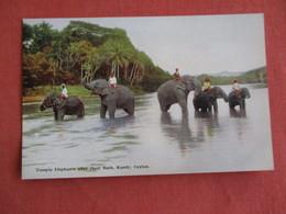 Sri Lanka (Ceylon)  Temple Elephants After Their Bath  Kandy Ceylon   Ref 3144 - Sri Lanka (Ceilán)