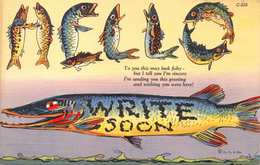 HELLO~WRITE SOON~WHOPPER FISH-LARGE LETTER 1940s POSTCARD 36449 - Fishing