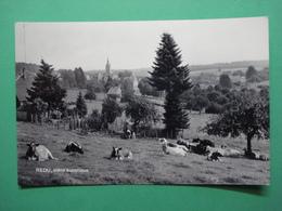Libin Redu Lesse Scene Busolique Cows - Libin