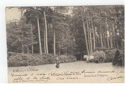 Brasschaat:  Brasschaet-Polygone,Paysage Au Château Du Mick N.311 F.Hoelen,Phot,Cappellen 1902 - Brasschaat