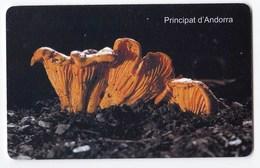 Télécarte De Andorre, Champignon  Mushroom Girolle - Télécartes