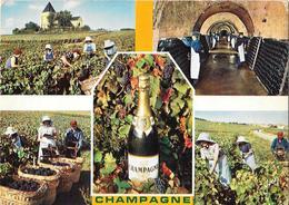 La Champagne Et Le Champagne - Vignes