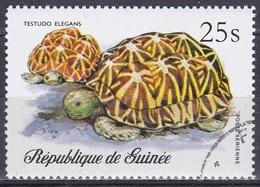 Guinea 1977 Tiere Fauna Animals Schildkröten Turtles Tortue Tortuga Tartaruga Reptilien Reptiles, Mi. 792 Gest. - Guinea (1958-...)