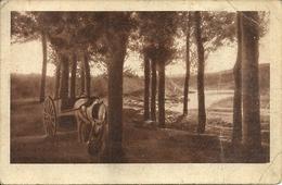 Paesaggi Rurali (Agresti), Paysages Ruraux, Rural Landscapes, Landliche Landschaften, 6 Cartoline - Agriculture