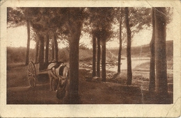 Paesaggi Rurali (Agresti), Paysages Ruraux, Rural Landscapes, Landliche Landschaften, 7 Cartoline, Post Cards - Vari