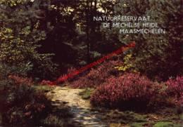 Natuurreservaat De Mechelse Heide - Maasmechelen - Maasmechelen