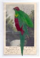 MATERIAL-AK - FEDERN, Vogel Aus Echtfedern, 1904, Sehr Gute Erhaltung - Ansichtskarten