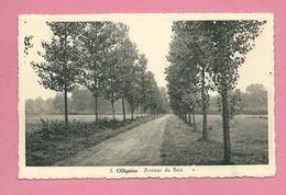 C.P. Ollignies = Avenue  Du  Bois - Lessines