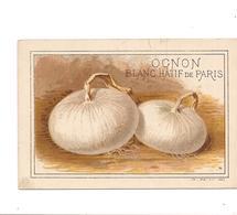 CHROMO  LEGUME OGNON BLANC HATIF DE PARIS  :   - VILMORIN - Minot - - Chromos