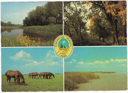 Kiskunsági Nemzeti Park - National Park Of Kiskunság - Wild Horses - Hongarije