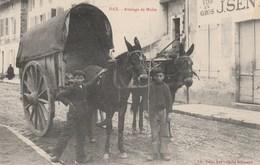 CPA - Attelage De Mules - Dax - Attelages