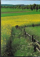 PANORAMA SU ARNSBERGER WALD - FOTO WERNER OTTO - VIAGGIATA 2003 - Fotografia