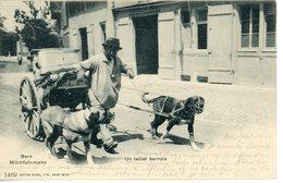 Berne - Laitier Bernois Bern Milchfuhrmann 1903 Attelage De Chiens - BE Berne
