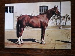 Cheval. Haras De Pompadour - Horses