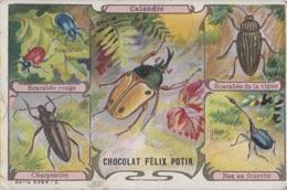 Chromos - Chromo Félix Potin - Insectes Scarabées - Chocolate