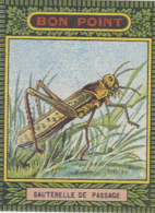 Images - Image - Ecole - Bon Point - Insectes Sauterelle Fourmi ... - Lot De 7 Bons-Points Publicité Blécao Blédine - Old Paper