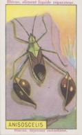 Chromos - Chromo Publicité Blédine Enfants - Insectes - Anisoscelis - Cromos