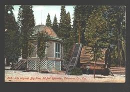 Calaveras - The Original Big Tree, 32 Feet Diameter - Etats-Unis